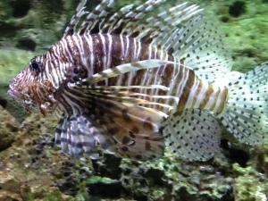 Photo taken at the Georgia Aquarium; 7/24/14